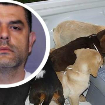 Veterinario colombiano traficaba heroína a EU adentro de perros